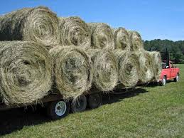 Can You Help By Making A Donation To Our Hay Fund Account? If You Can't Donate But Have Some Clean, Weed Free Round Or Square Bales Of Hay We Would Be Happy To Pick Them Up.